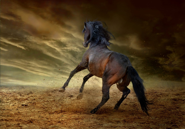 Steig ab vom toten Pferd Hettl