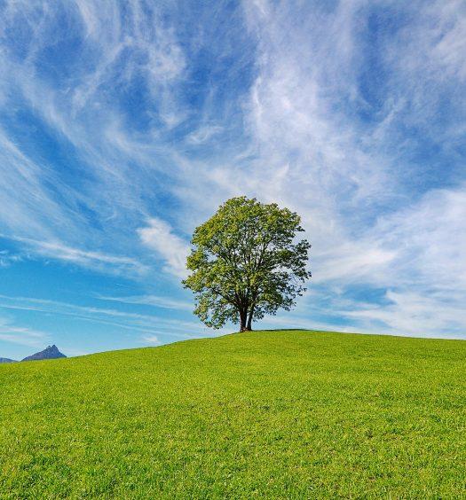 Zielsetzung und Erarbeitung einer Lebensvision Hettl