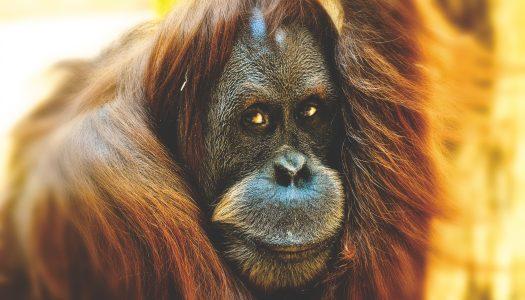 Affen-Banane-Duschen-Story