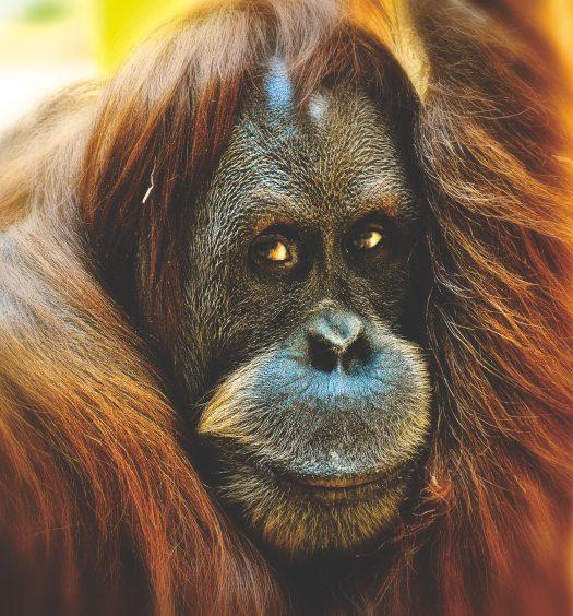 Affen-Banane-Duschen-Story Hettl