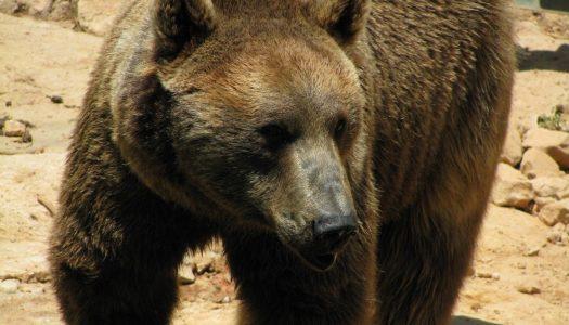 Bärenstark Führen