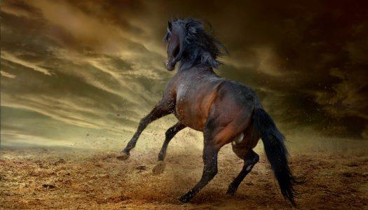 Steig ab vom toten Pferd