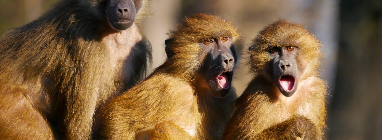 Vorsicht Rückdelegation – Monkey Business vermeiden Hettl