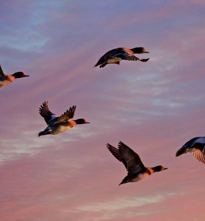 10 Tipps zur Krisenkommunikation Hettl