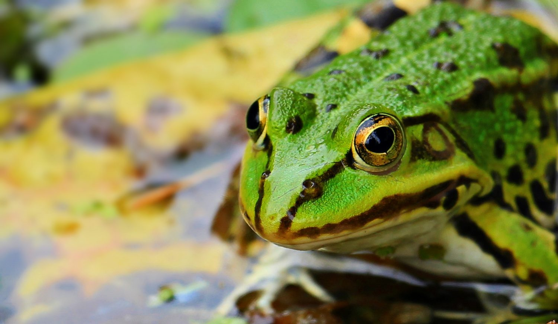 Boiling-Frog-Syndrom-Hettl