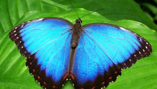 Was Sie vom Schmetterling lernen können
