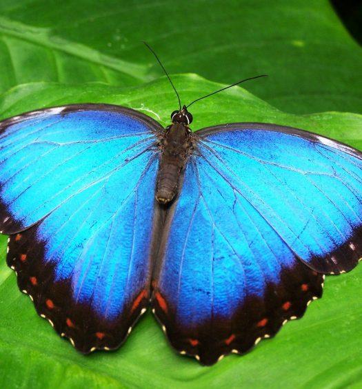 Was-Sie-vom-Schmetterling-lernen-können-Hettl