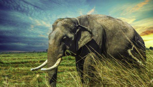 Der Elefant im Zirkus