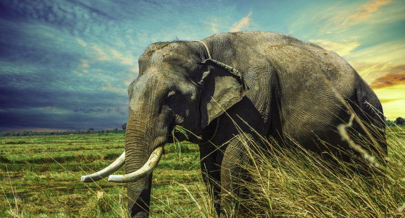 Der-Elefant-im-Zirkus-Hettl